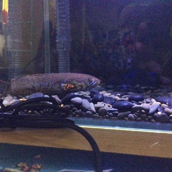 今天鱼的状态好差 北京观赏鱼 北京龙鱼第2张