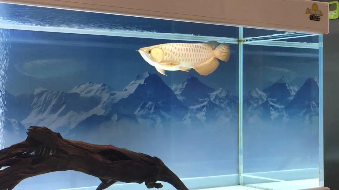 求高手指点龙鱼 北京龙鱼论坛