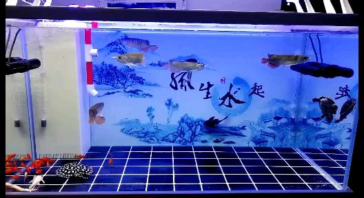 新人打卡开缸一个月 北京龙鱼论坛