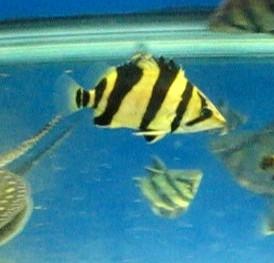 虎友们选背景北京腾龙鱼缸的问题 北京观赏鱼 北京龙鱼第2张