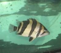 虎友们选背景北京腾龙鱼缸的问题 北京观赏鱼 北京龙鱼第1张