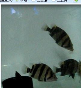 虎友们选背景北京腾龙鱼缸的问题 北京观赏鱼 北京龙鱼第3张