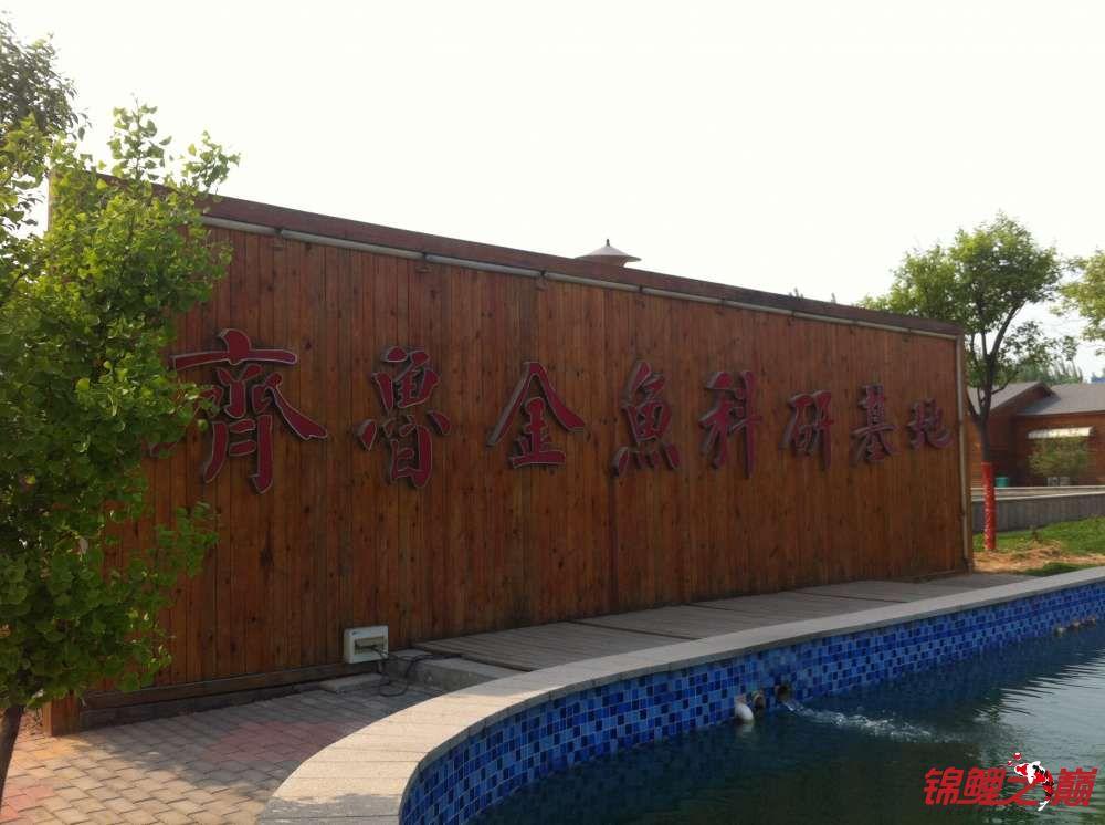 参观锦鲤养殖厂纪念 北京观赏鱼 北京龙鱼第3张