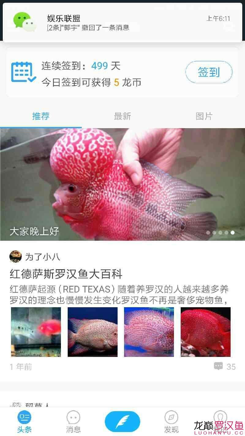 500天罗汉鱼