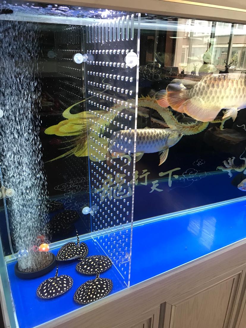 必须隔开养龙鱼 北京龙鱼论坛 北京龙鱼第1张