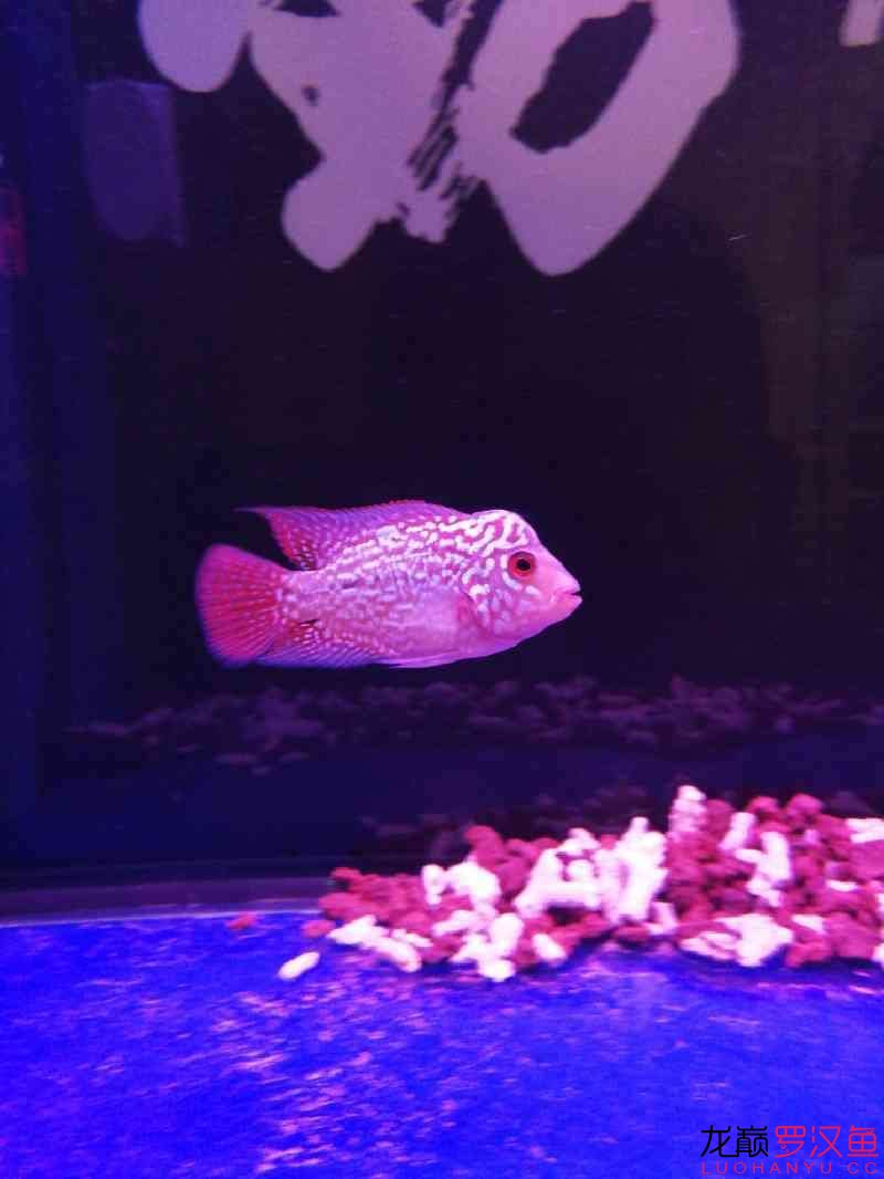 这种鱼缸适合放底砂吗 北京观赏鱼 北京龙鱼第1张