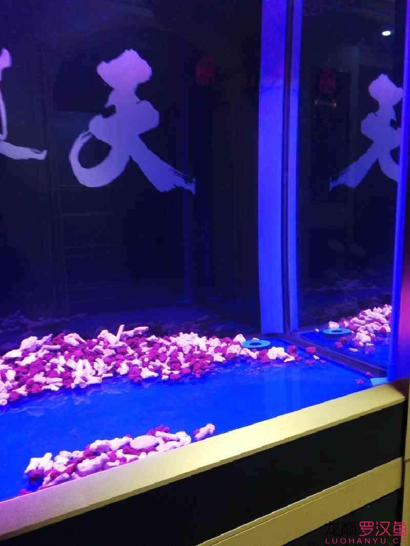 这种鱼缸适合放底砂吗 北京观赏鱼 北京龙鱼第4张