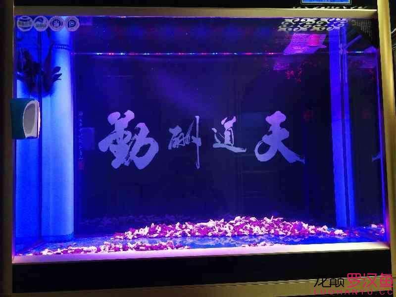 这种鱼缸适合放底砂吗 北京观赏鱼 北京龙鱼第3张