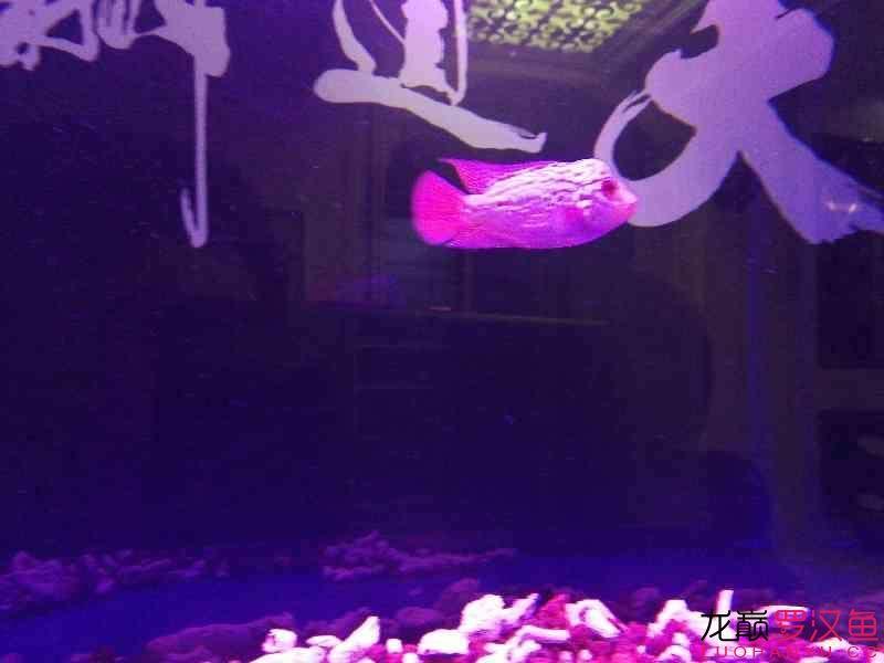 这种鱼缸适合放底砂吗 北京观赏鱼 北京龙鱼第5张