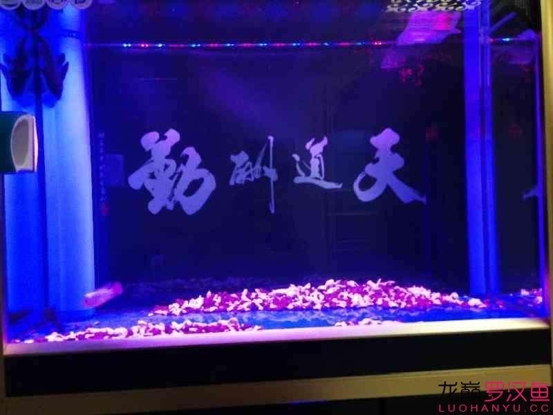 这种鱼缸适合放底砂吗 北京观赏鱼 北京龙鱼第6张