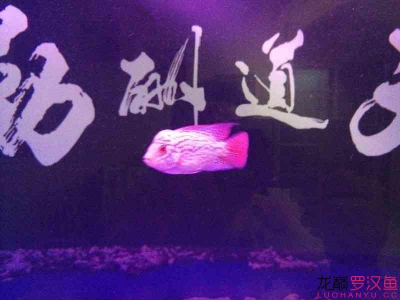 这种鱼缸适合放底砂吗 北京观赏鱼 北京龙鱼第7张