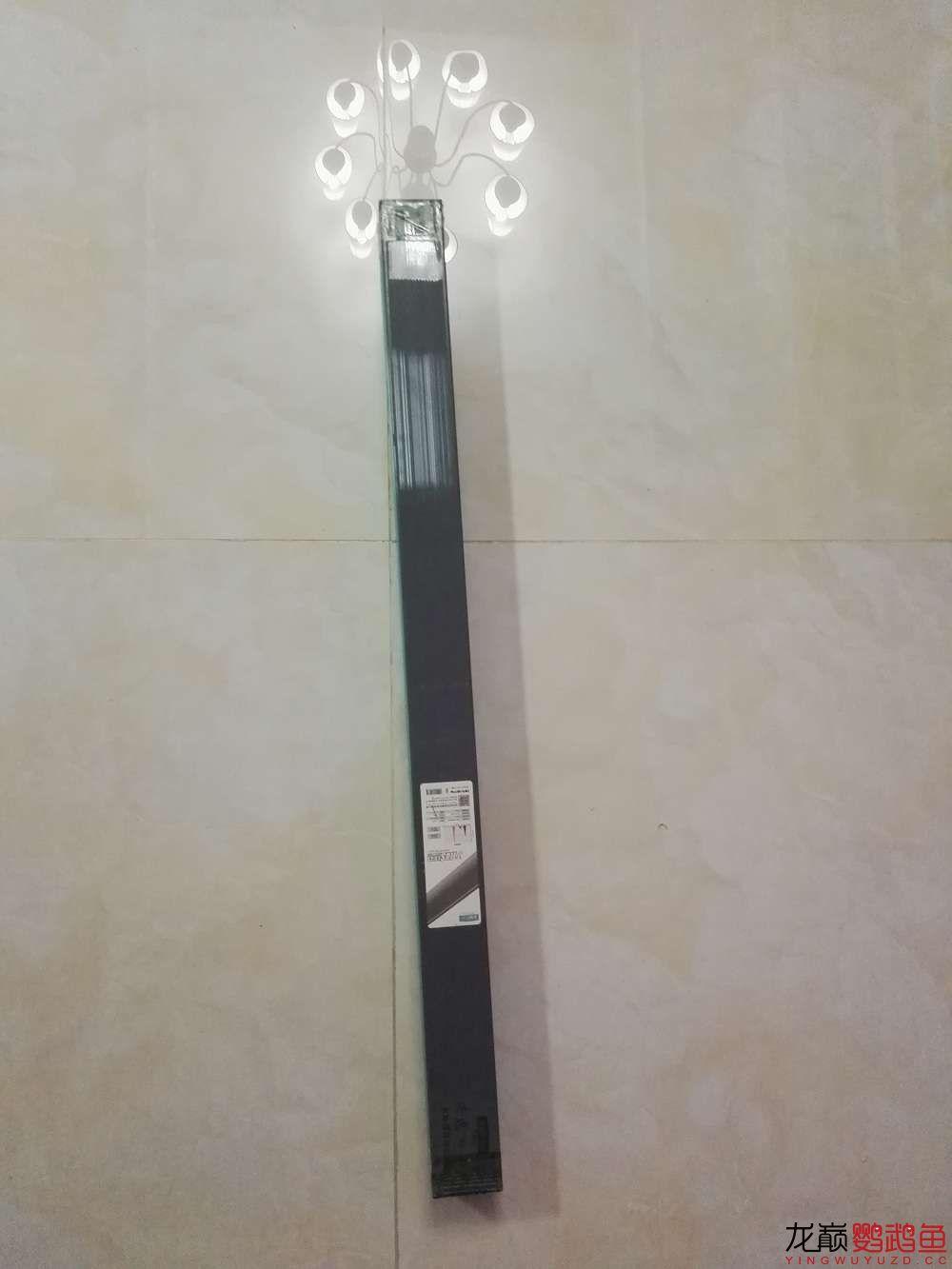 吉印刀锋S鹦鹉鱼LED引色灯水中贵族的体验 北京龙鱼论坛 北京龙鱼第1张