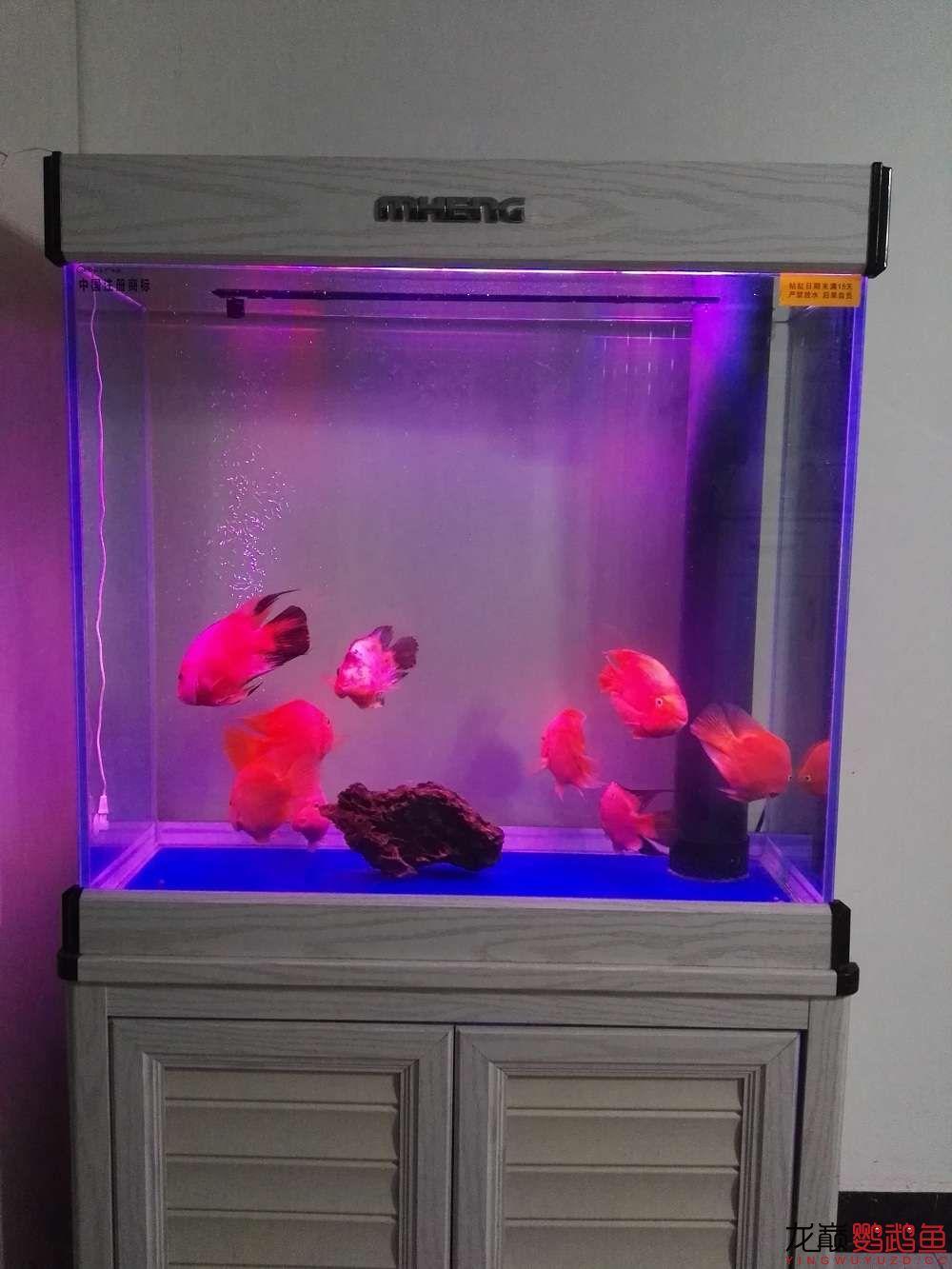 吉印刀锋S鹦鹉鱼LED引色灯水中贵族的体验 北京龙鱼论坛 北京龙鱼第21张