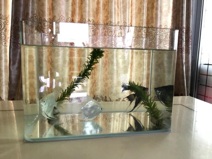 求问燕鱼神仙鱼打氧问题 北京龙鱼论坛 北京龙鱼第1张