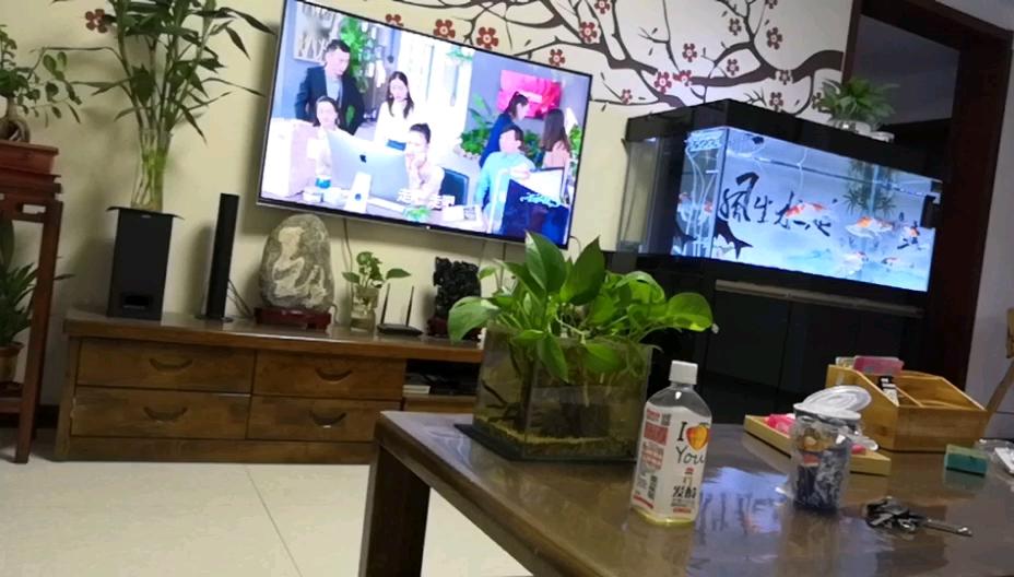锦鲤和鹦鹉混养可以吗 北京观赏鱼 北京龙鱼第1张