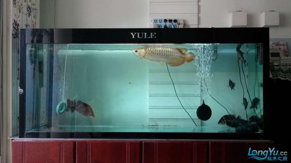 鱼趣养水机养水说一说+近两年没有养水了 北京龙鱼论坛 北京龙鱼第1张