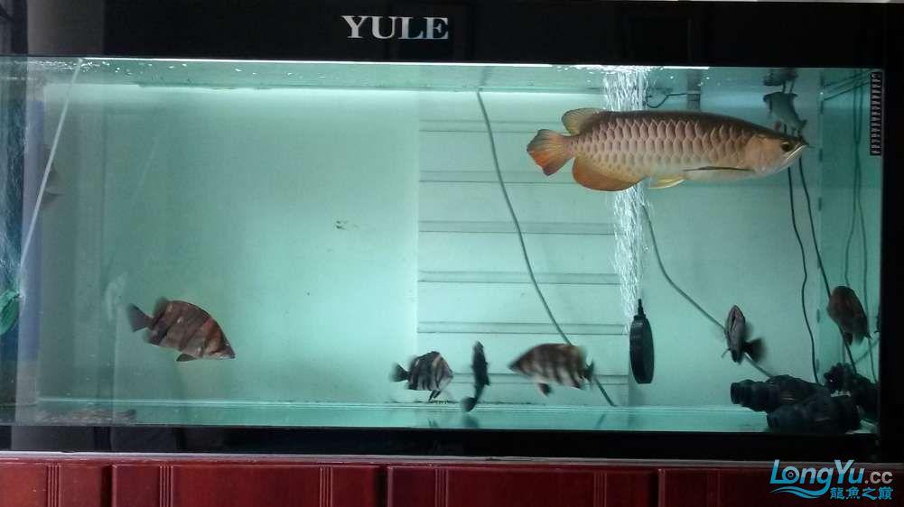 鱼趣养水机养水说一说+近两年没有养水了 北京龙鱼论坛 北京龙鱼第2张
