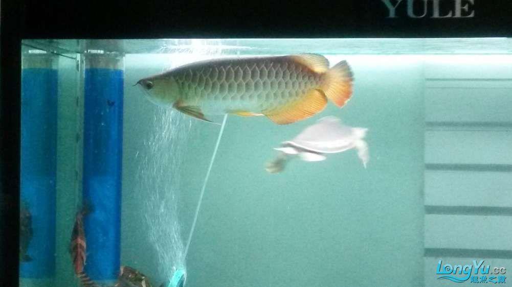 鱼趣养水机养水说一说+近两年没有养水了 北京龙鱼论坛 北京龙鱼第4张