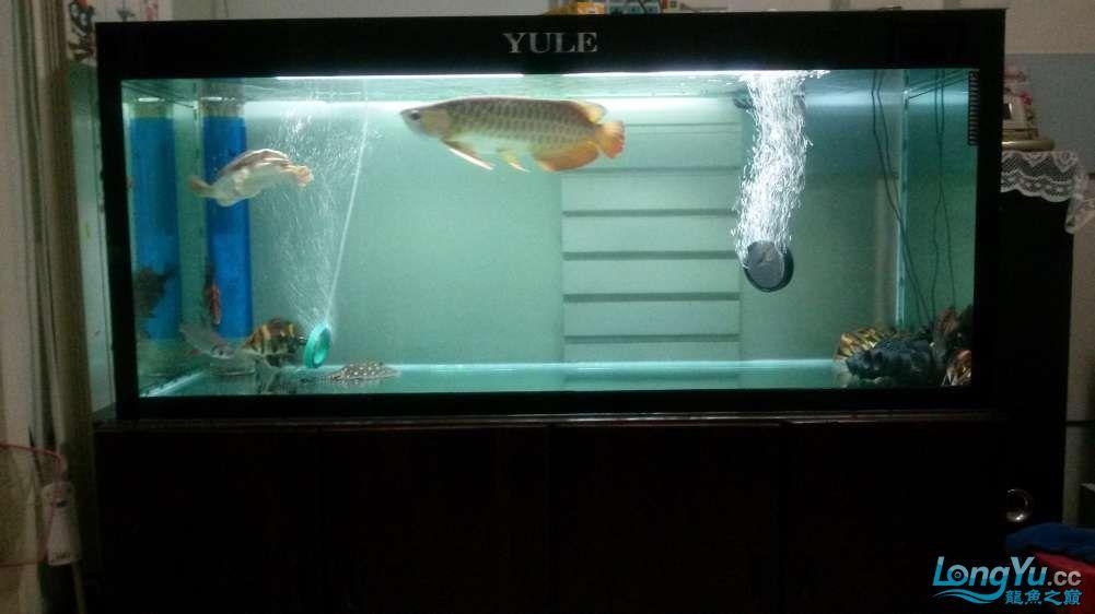 鱼趣养水机养水说一说+近两年没有养水了 北京龙鱼论坛 北京龙鱼第5张