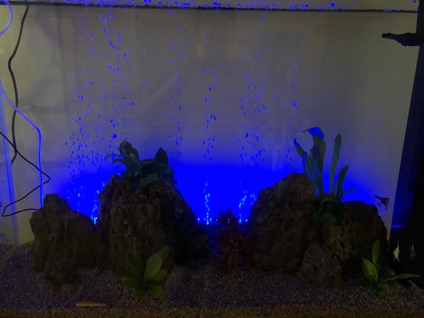 折腾呀鱼种混养 北京龙鱼论坛 北京龙鱼第4张