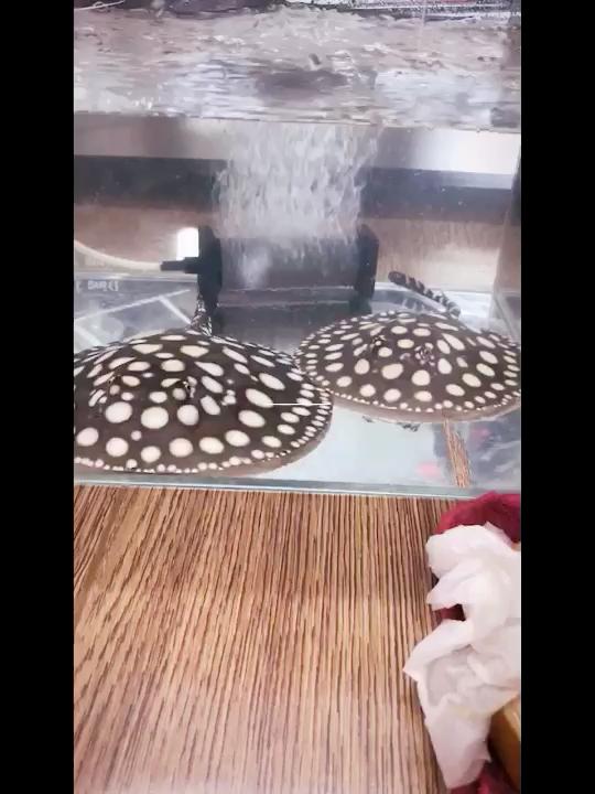 过水中龙鱼 北京龙鱼论坛 北京龙鱼第1张