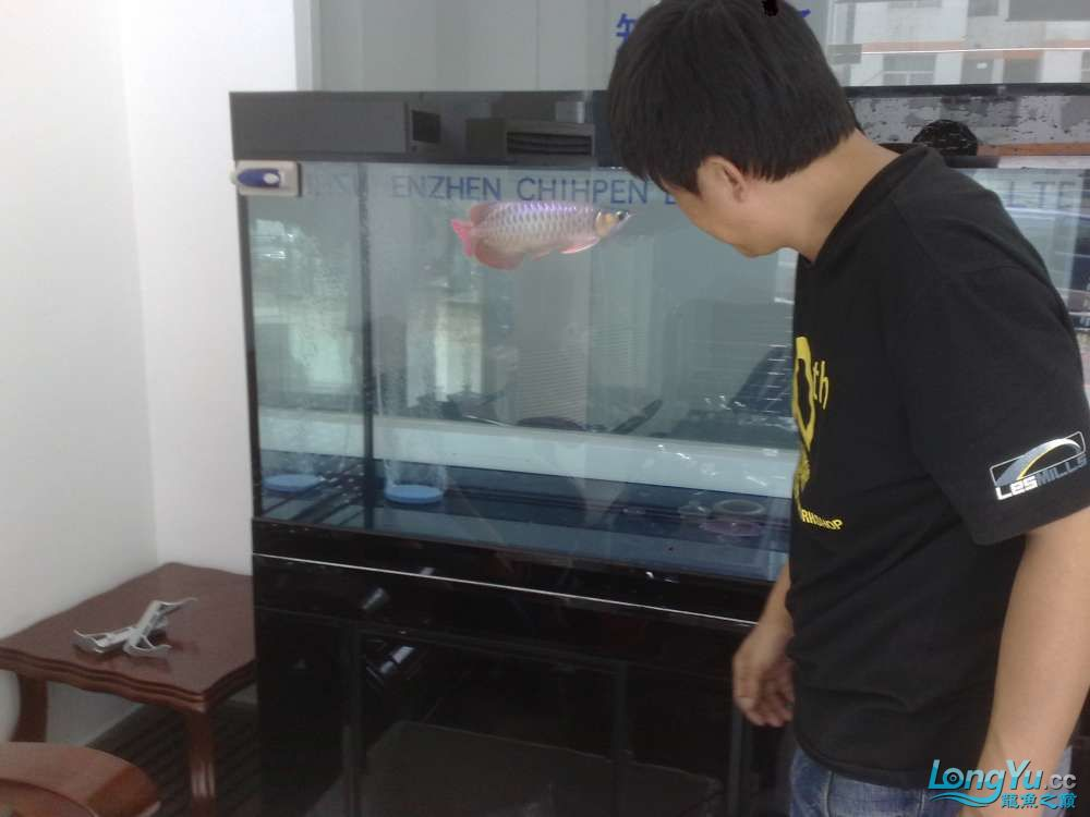 八戒家的超级红龙 北京龙鱼论坛 北京龙鱼第6张