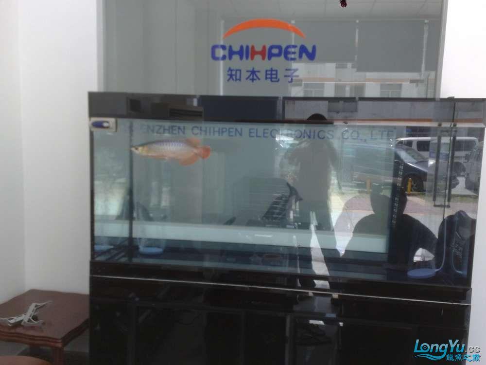 八戒家的超级红龙 北京龙鱼论坛 北京龙鱼第13张