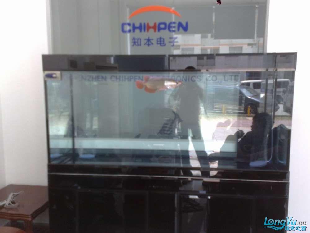 八戒家的超级红龙 北京龙鱼论坛 北京龙鱼第14张