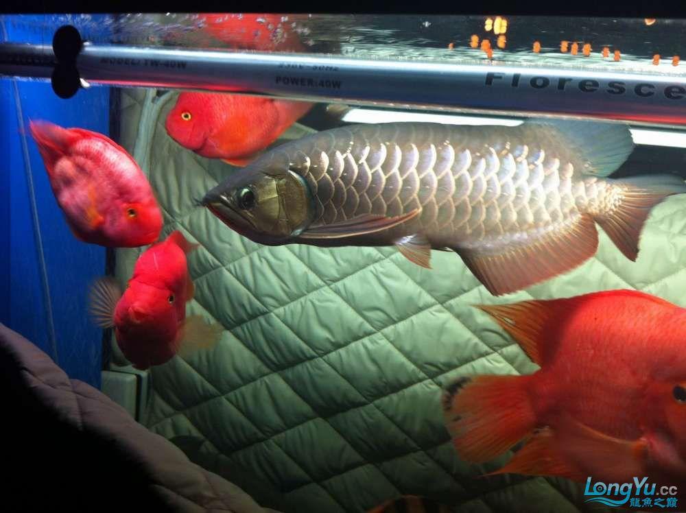 请各位PP此条宝石发前途 北京龙鱼论坛 北京龙鱼第3张