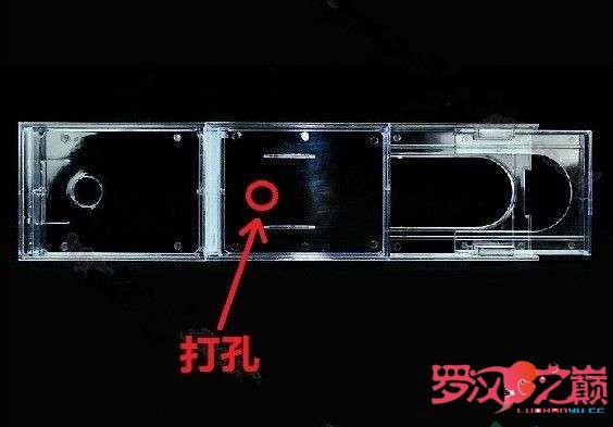 讨论一下滴滤的降噪问题 北京观赏鱼 北京龙鱼第2张