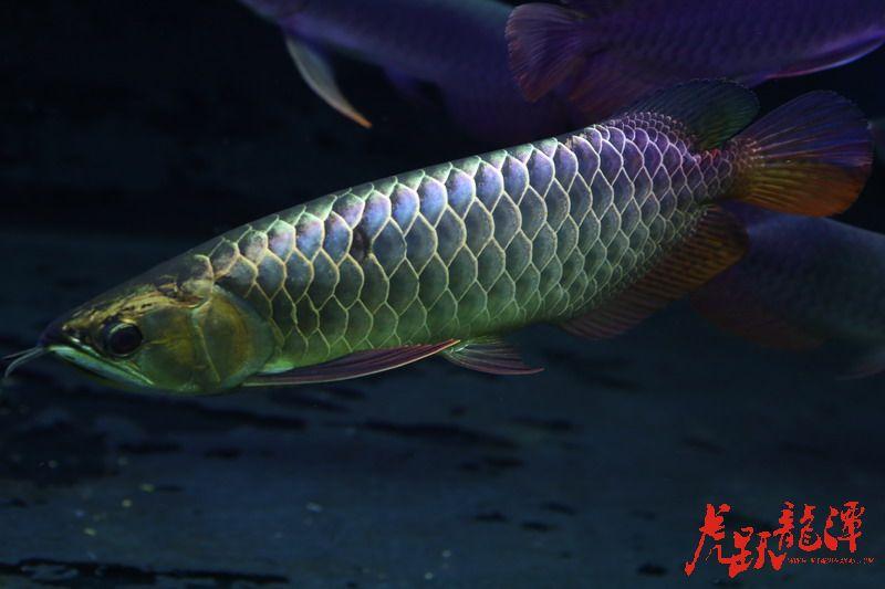 鱼缸温度控制加热棒不精准解决办法 北京龙鱼论坛 北京龙鱼第4张