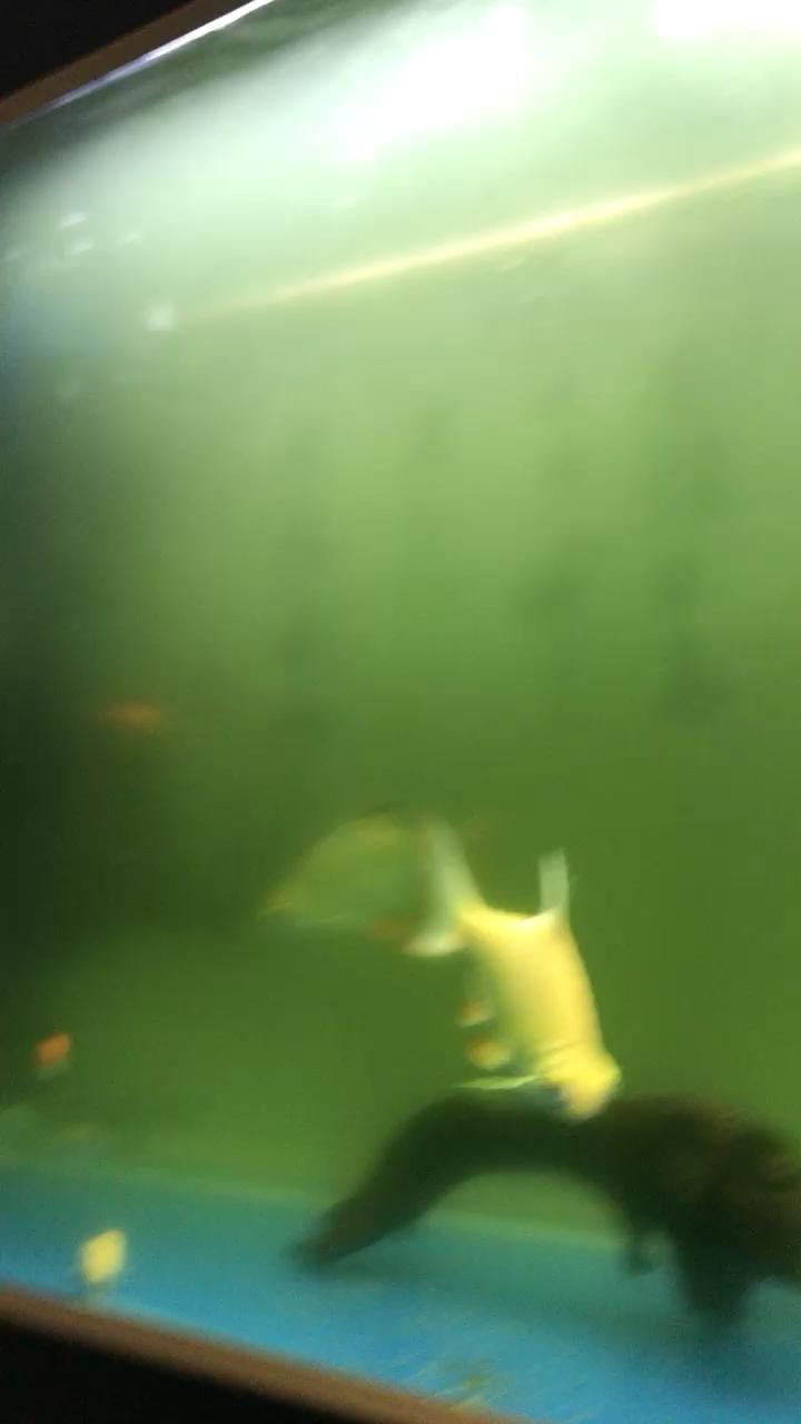 水全变黄色测了水质没问题求解 北京龙鱼论坛 北京龙鱼第1张