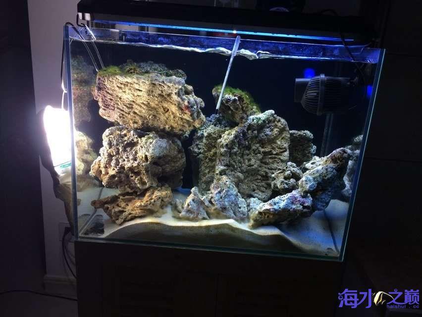 爆藻9天没有灯光的地方不爆藻加了一个外挂小灯 北京观赏鱼 北京龙鱼第1张