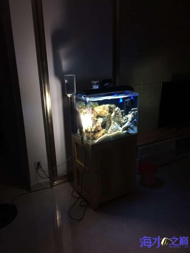 爆藻9天没有灯光的地方不爆藻加了一个外挂小灯 北京观赏鱼 北京龙鱼第2张