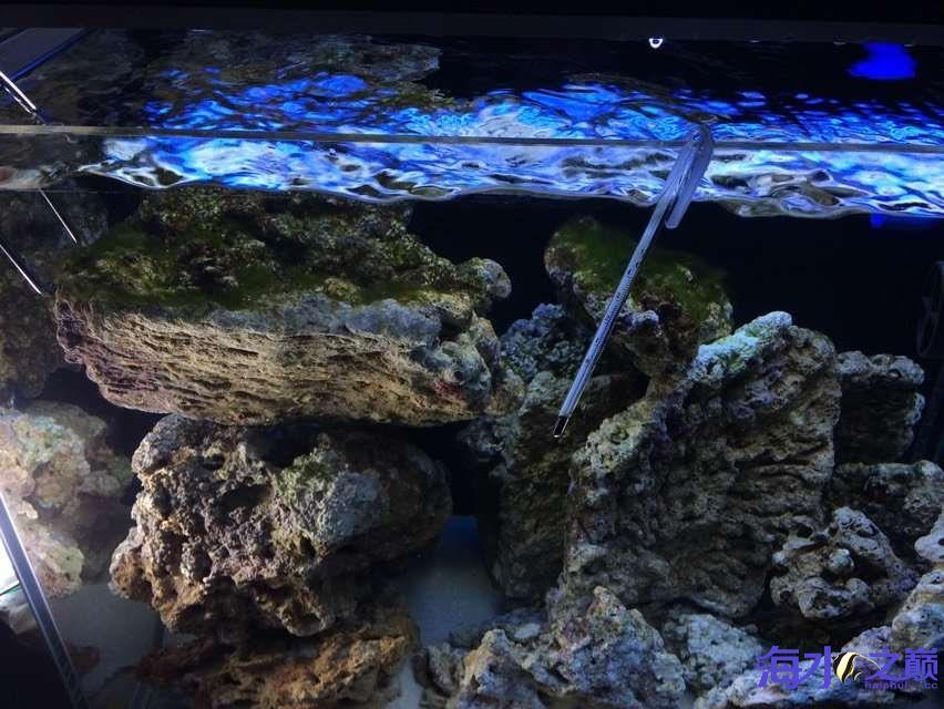 爆藻9天没有灯光的地方不爆藻加了一个外挂小灯 北京观赏鱼 北京龙鱼第3张