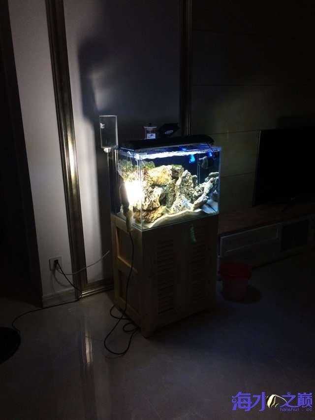 爆藻9天没有灯光的地方不爆藻加了一个外挂小灯 北京观赏鱼 北京龙鱼第5张