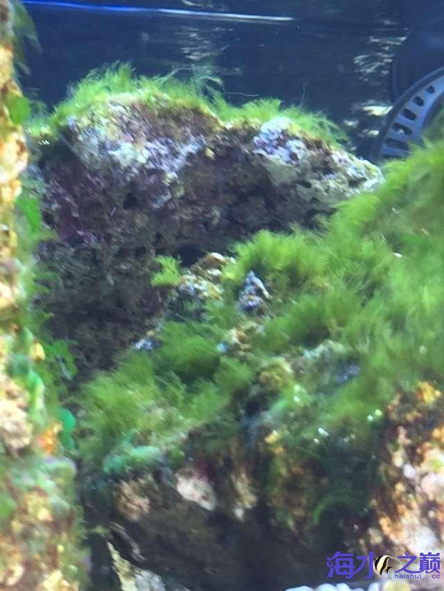 爆藻9天没有灯光的地方不爆藻加了一个外挂小灯 北京观赏鱼 北京龙鱼第6张
