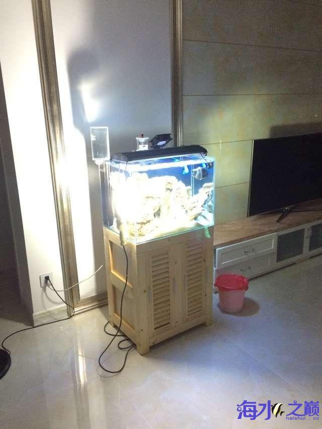 爆藻9天没有灯光的地方不爆藻加了一个外挂小灯 北京观赏鱼 北京龙鱼第4张