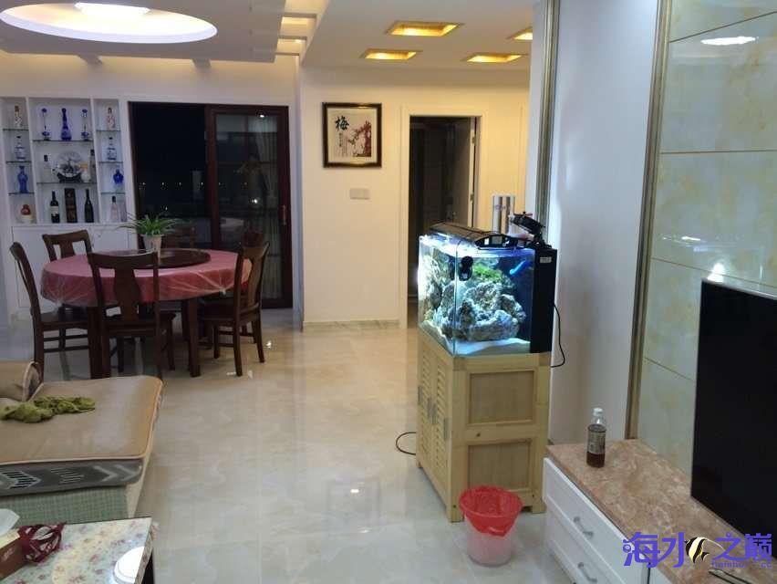 爆藻9天没有灯光的地方不爆藻加了一个外挂小灯 北京观赏鱼 北京龙鱼第10张
