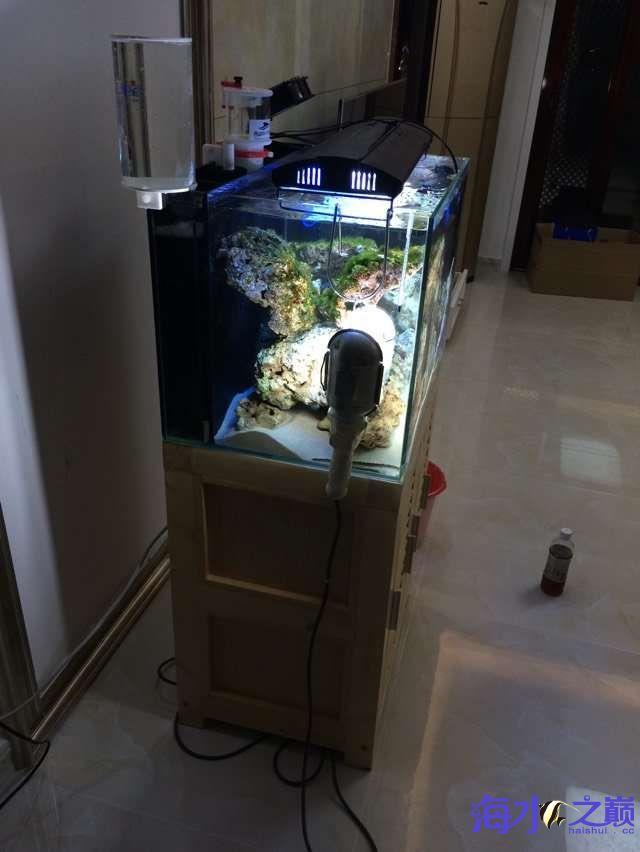爆藻9天没有灯光的地方不爆藻加了一个外挂小灯 北京观赏鱼 北京龙鱼第13张