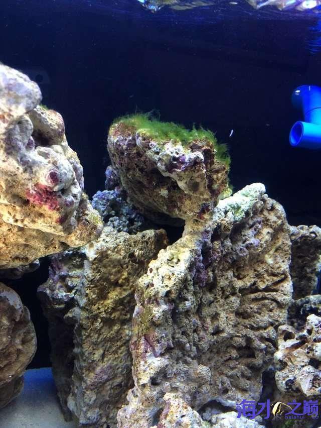 爆藻9天没有灯光的地方不爆藻加了一个外挂小灯 北京观赏鱼 北京龙鱼第14张