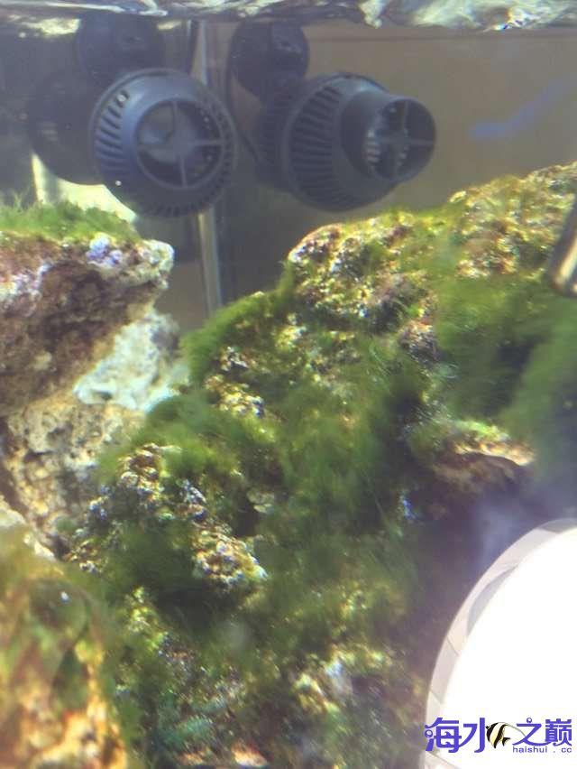爆藻9天没有灯光的地方不爆藻加了一个外挂小灯 北京观赏鱼 北京龙鱼第16张