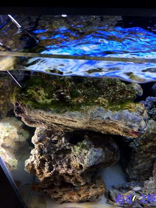 爆藻9天没有灯光的地方不爆藻加了一个外挂小灯 北京观赏鱼 北京龙鱼第18张