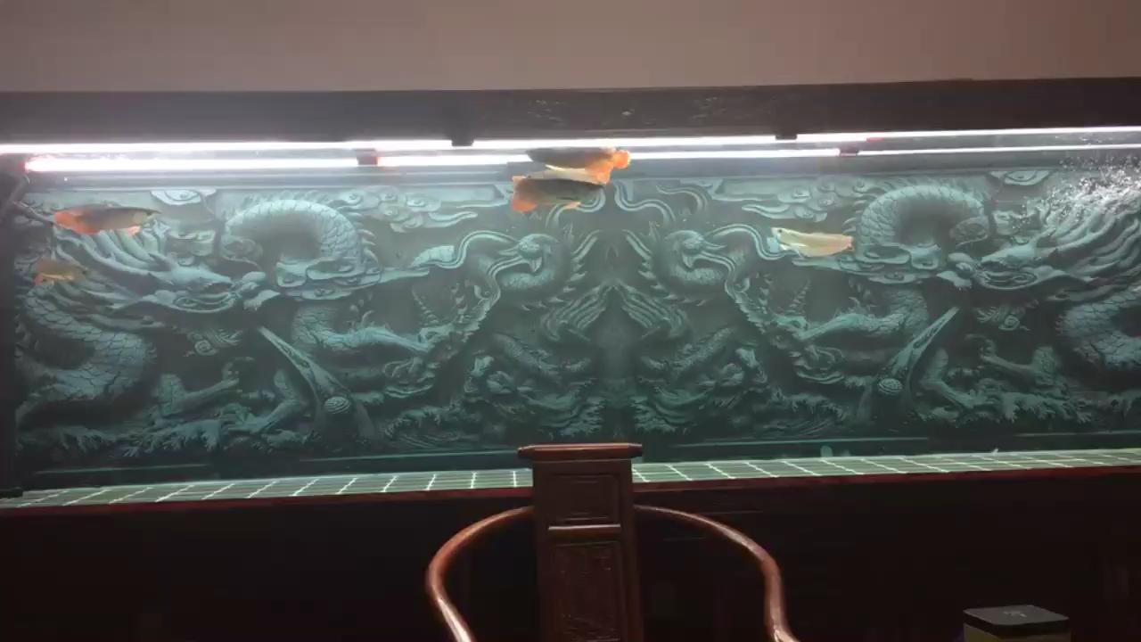 被客户忽悠中毒正式进入龙鱼圈北京白子银板鱼 北京龙鱼论坛 北京龙鱼第1张