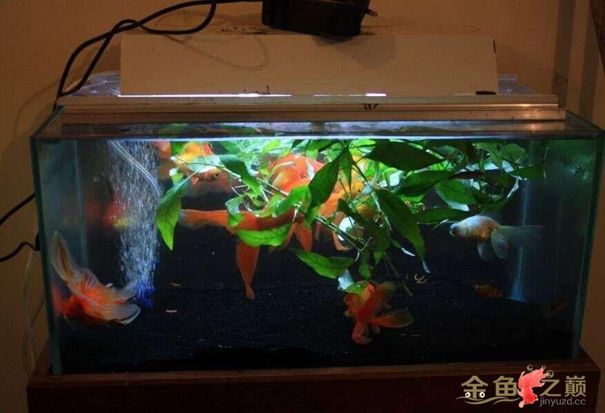 新手养鱼看看我的缸怎么样 北京龙鱼论坛 北京龙鱼第1张