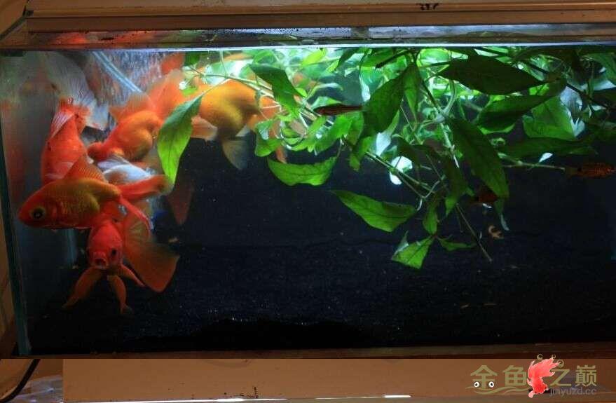 新手养鱼看看我的缸怎么样 北京龙鱼论坛 北京龙鱼第2张