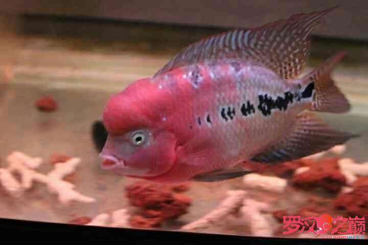 幻彩继续北京鱼缸沉木水草制作更新 北京观赏鱼 北京龙鱼第1张