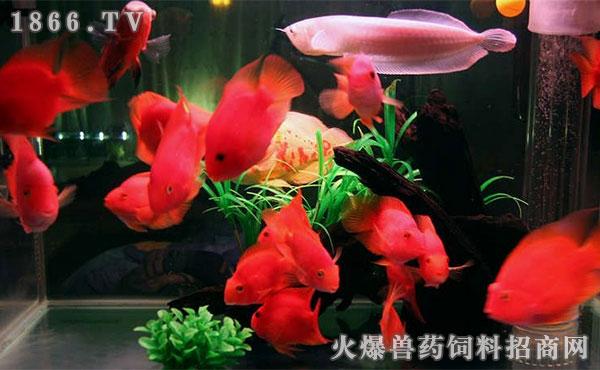 自然光下的小鱼 北京观赏鱼 北京龙鱼第2张