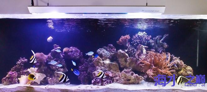 北京哪个水族店卖细线银板鱼为什么你的海水鱼入缸就挂?仅供参考