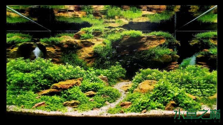 个人较为喜欢的几个莫丝水草造景 北京龙鱼论坛 北京龙鱼第1张